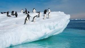 pinguini-antartide
